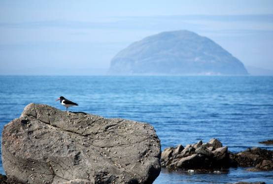 Ailsa Craig and Oystercatcher - Paul Benson