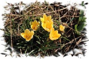 Yellow flowers - Lynn Leedham