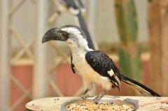 Bird - Niel Bywood