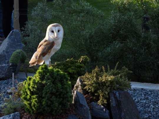 Barn Owl by Mandy Broadbent