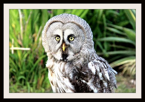 Owl eyes by Lynn Leedham